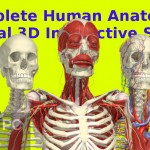 Complete Human Anatomy Primal 3D Interactive Series Free Download